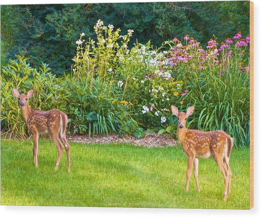 Fawns In The Afternoon Sun Wood Print