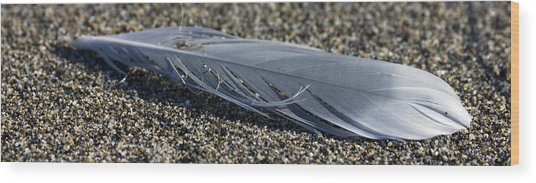 Feather And Sand Wood Print