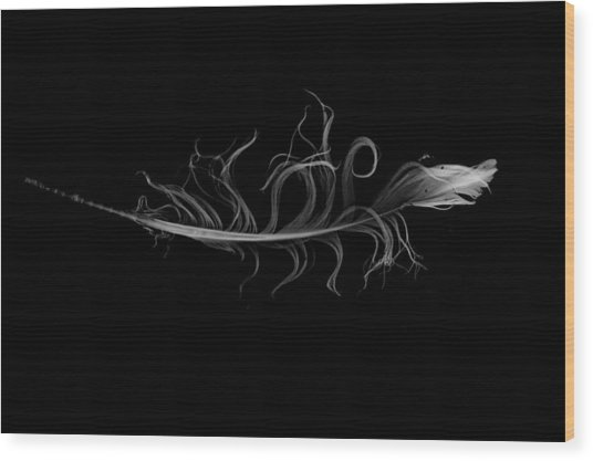 feather II Wood Print