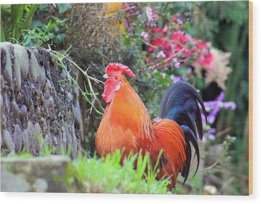 feathered alarm II Wood Print