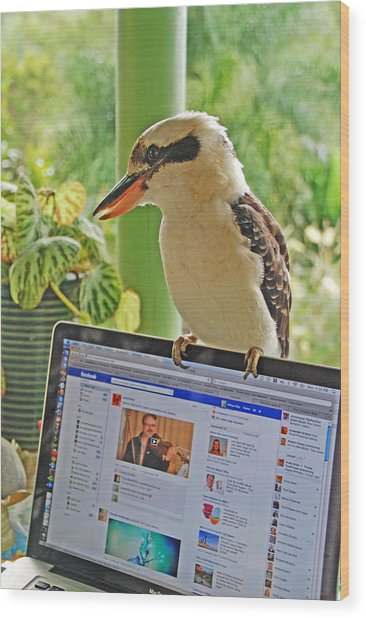 Feathered Facebook Fan Wood Print