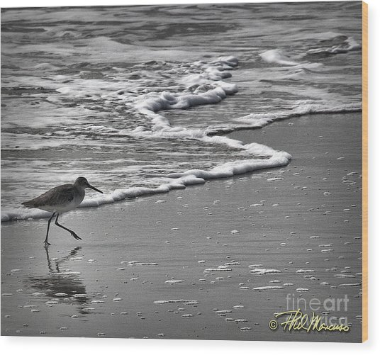 Feathered Friend At The Beach Wood Print