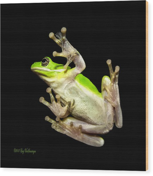 Feathered Frog Wood Print
