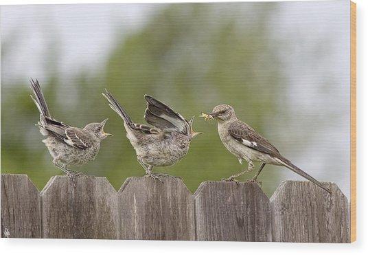 Feed Me Wood Print by Hazel Billingsley