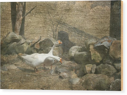 Feeding Geese   Wood Print