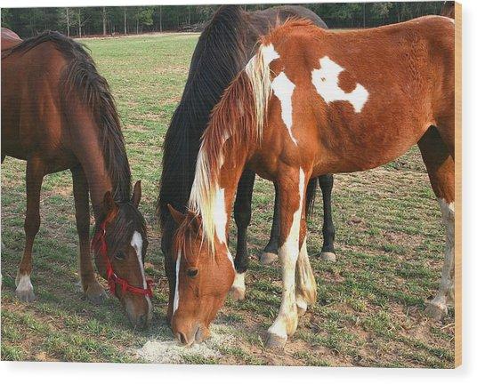 Feeding Horses Wood Print