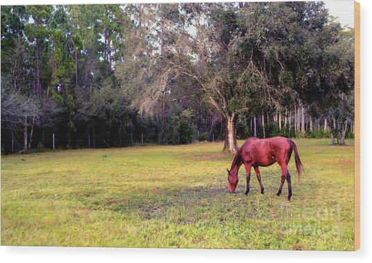 Feeding In The Pasture Wood Print