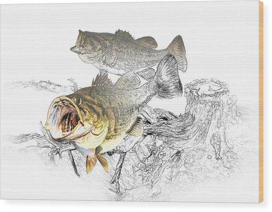 Feeding Largemouth Black Bass Wood Print