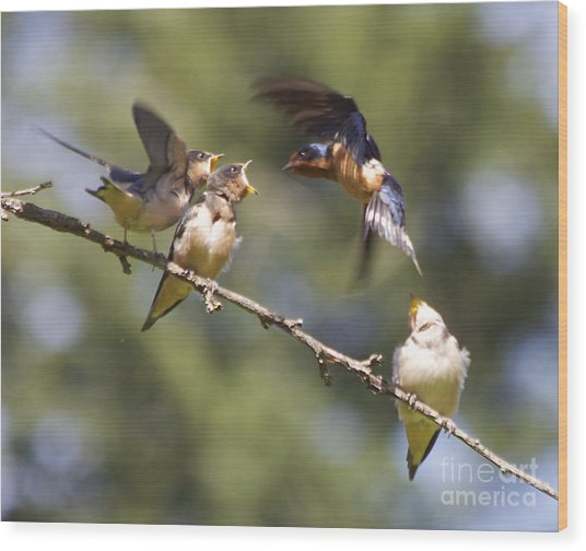 Feeding Time Wood Print by Tracey Levine
