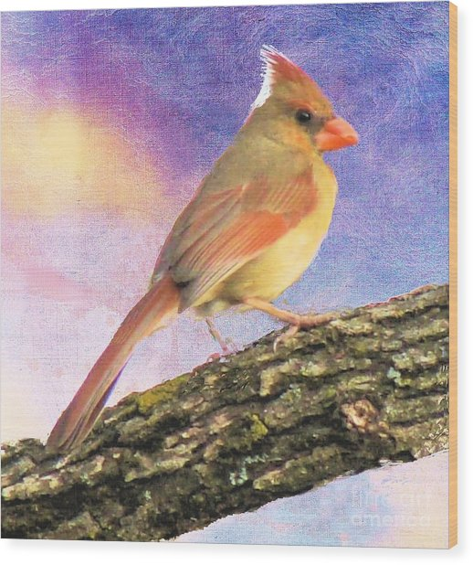 Female Cardinal Away From Sun Wood Print