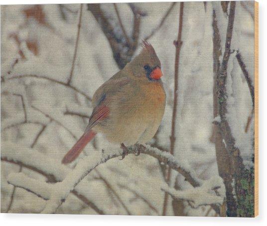 Female Cardinal In The Snow II Wood Print