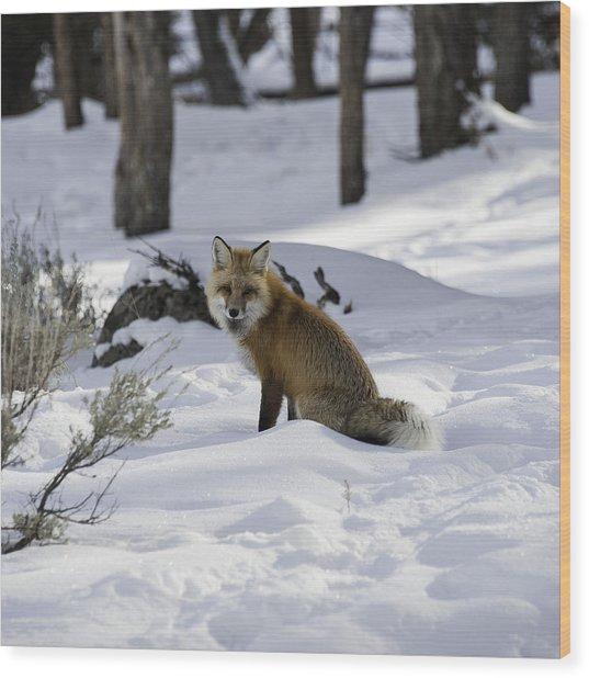 Female Fox Wood Print