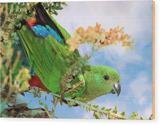 Female King Parrot Wood Print