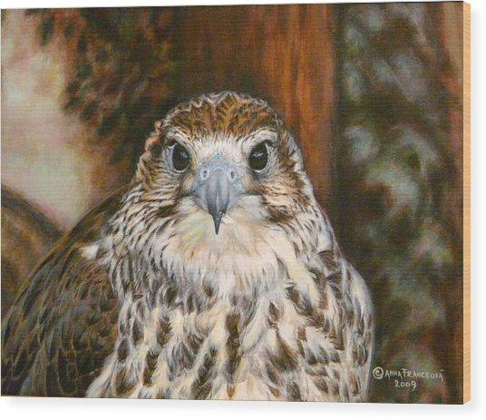 Female Of Saker Falcon Wood Print by Anna Franceova