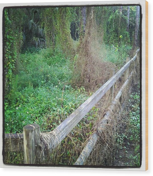 Fence Wood Print by Chasity Johnson