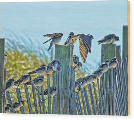 Fence Sitters Wood Print by Constantine Gregory