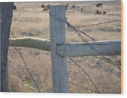Fenced Wood Print by Kelly Kitchens
