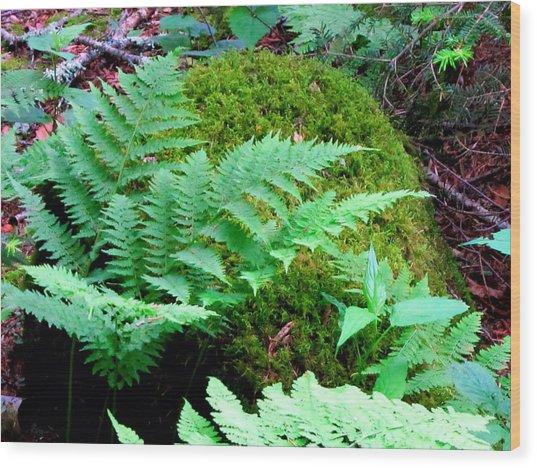 Fern And Moss Wood Print