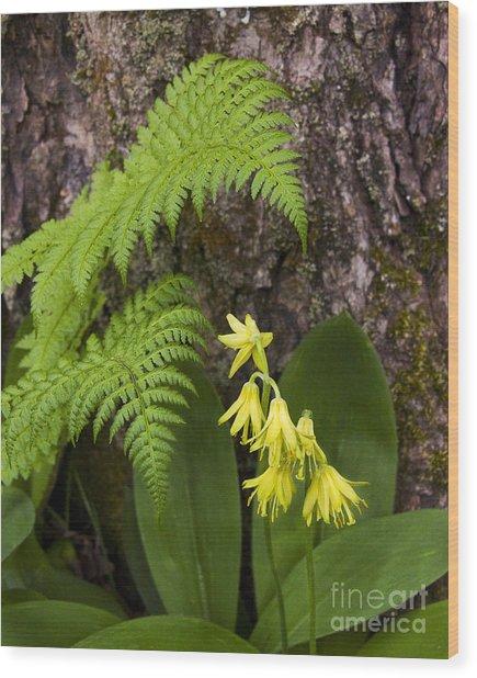 Fern And Wild Flowers Wood Print