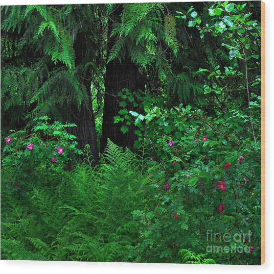 Fern And Wild Roses Wood Print