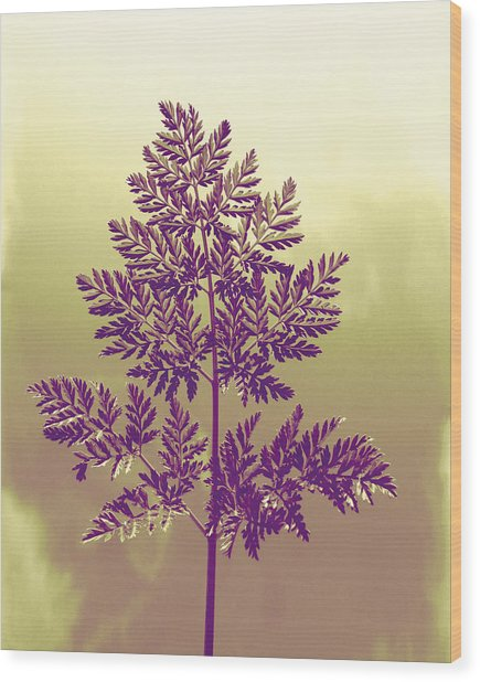 Fern Wood Print by Andrea Dale
