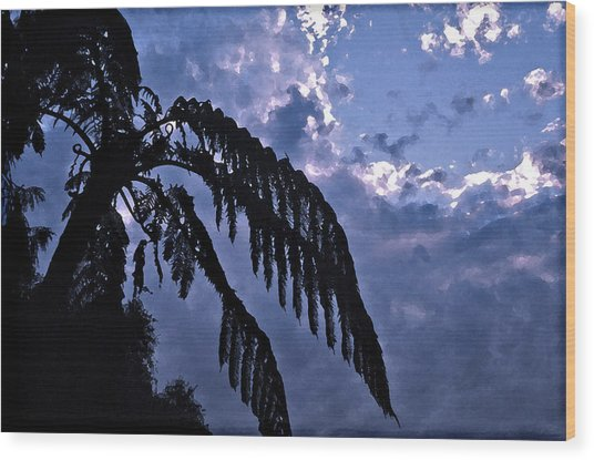 Fern At Twilight Wood Print