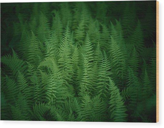 Fern Bed Wood Print