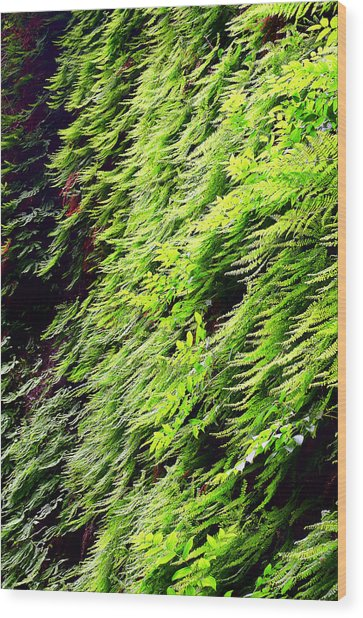 Fern Canyon Wood Print