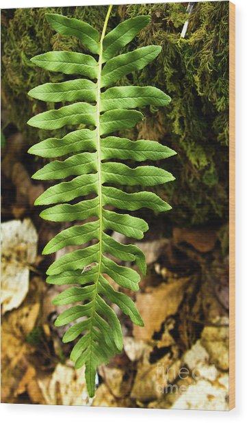 Fern Leaf Alone Wood Print