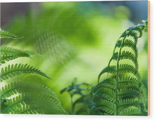 Fern Leaves. Healing Art Wood Print