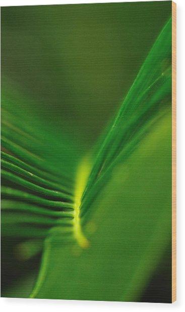 Fern Lines Wood Print