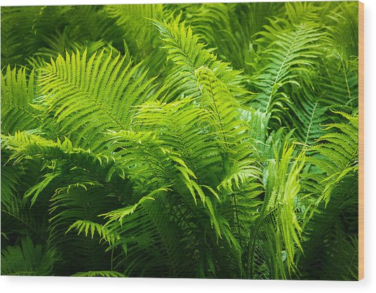 Ferns 1 Wood Print