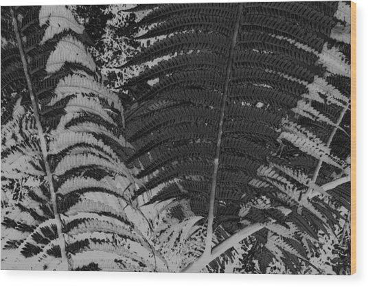 Ferns Wood Print by Colleen Cannon