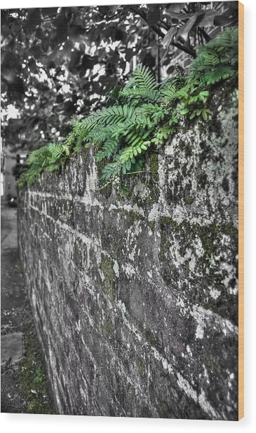 Ferns On Old Brick Wall Wood Print