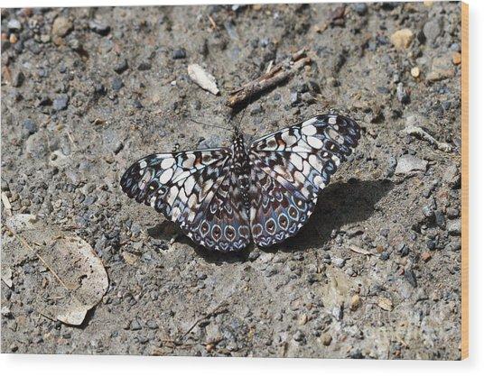 Feronia Cracker Butterfly Wood Print
