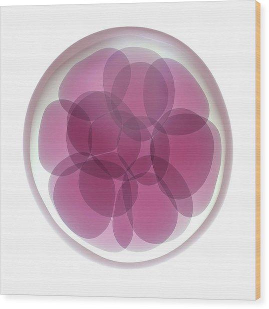 Fertilised Egg Cell Dividing Wood Print by Maurizio De Angelis