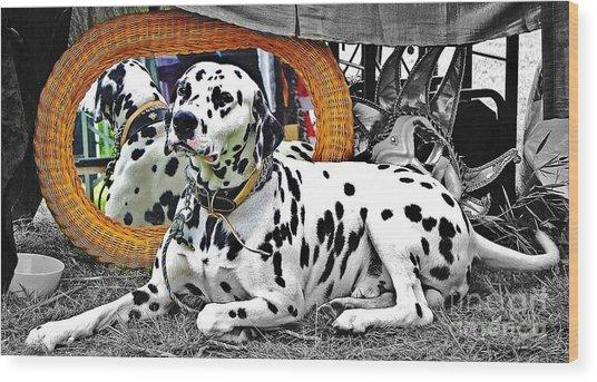 Festival Dog Wood Print