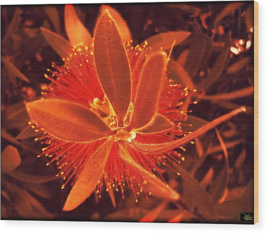 Fiber Optic Flower Wood Print