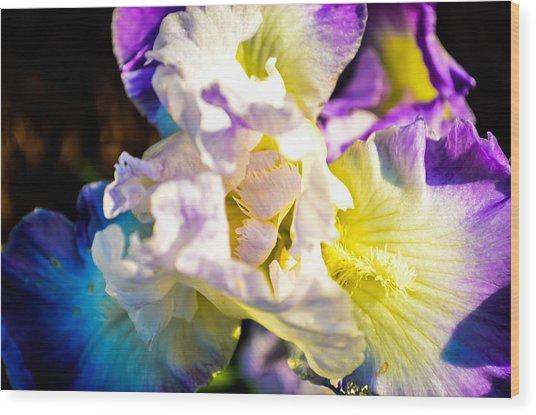 Fickle Iris  Wood Print