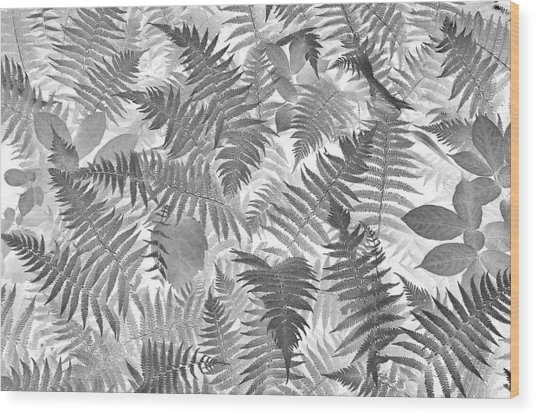 Fiddlehead Ferns Wood Print