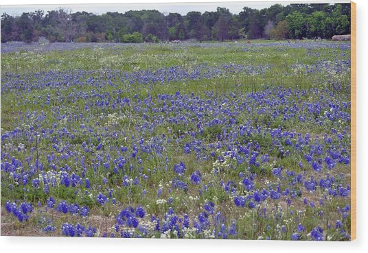 Field Of Bluebonnets Wood Print by Judith Russell-Tooth
