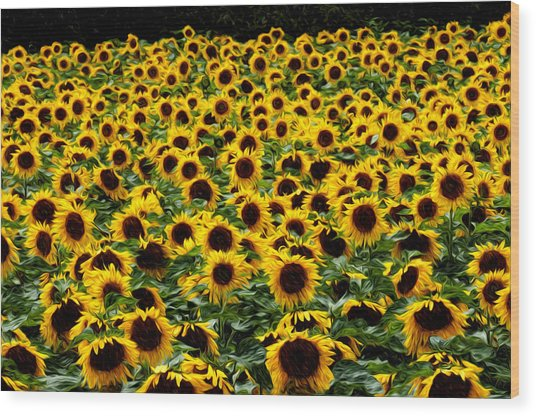 Field Of Flowers Wood Print by Mitchell Brown