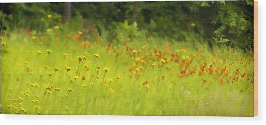 Field Of Indian Paintbrushes Wood Print
