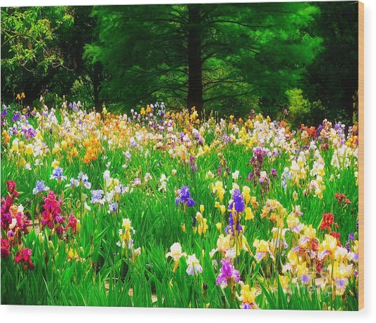 Field Of Iris Wood Print