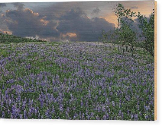 Field Of Lupine Wood Print