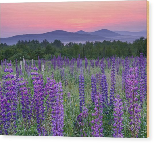 Field Of Purple Wood Print