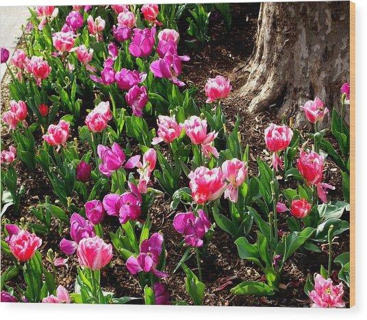 'field Of Springtime'  Wood Print