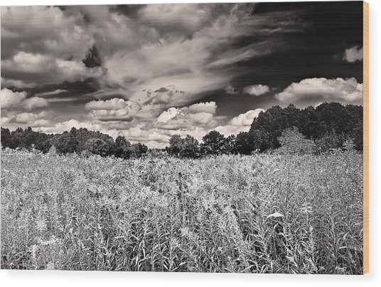 Fields Of Gold And Clouds Wood Print