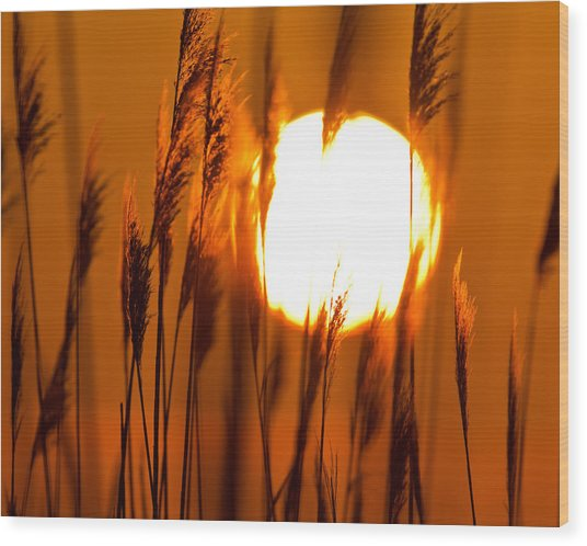 Fiery Grasses Wood Print