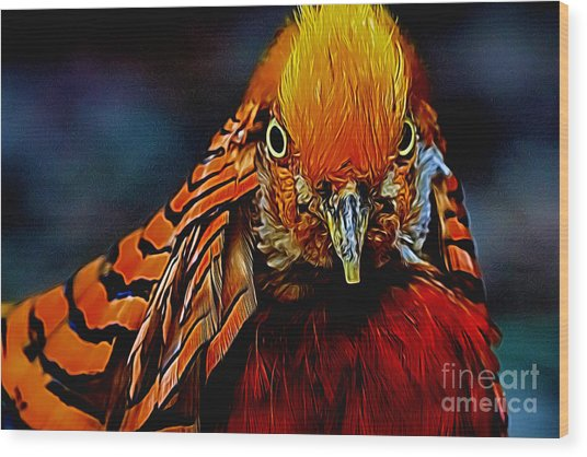 Fiery Pheasant Wood Print